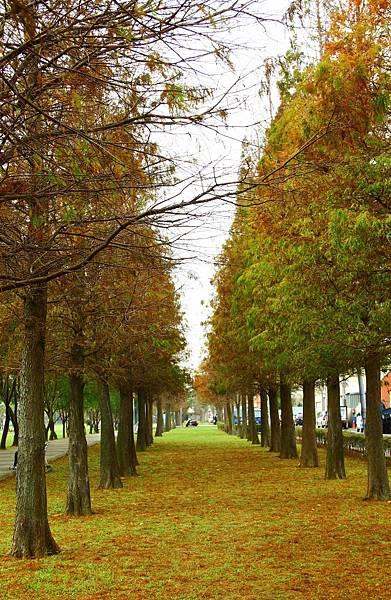 玉山公園落羽松 014 (666x1024).jpg