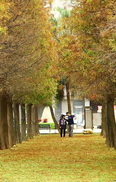 玉山公園落羽松 045 (653x1024).jpg