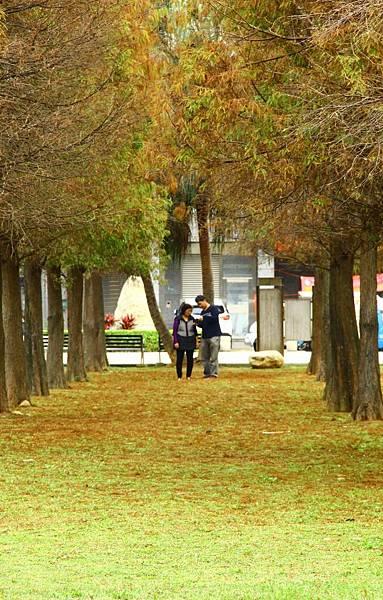 玉山公園落羽松 046 (653x1024).jpg