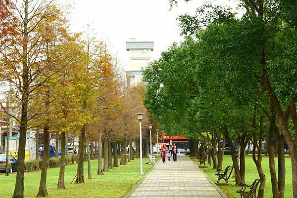玉山公園落羽松 052 (1024x683).jpg