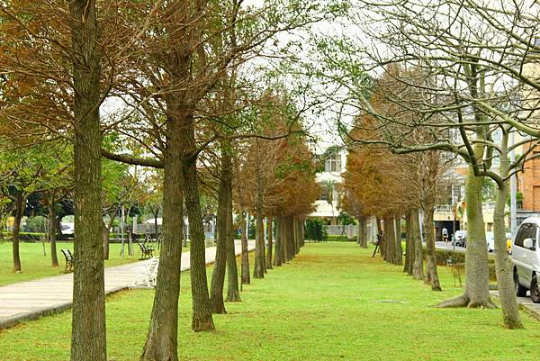 玉山公園落羽松 055 (1024x683).jpg