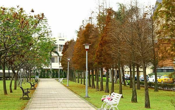 玉山公園落羽松 057 (1024x643).jpg