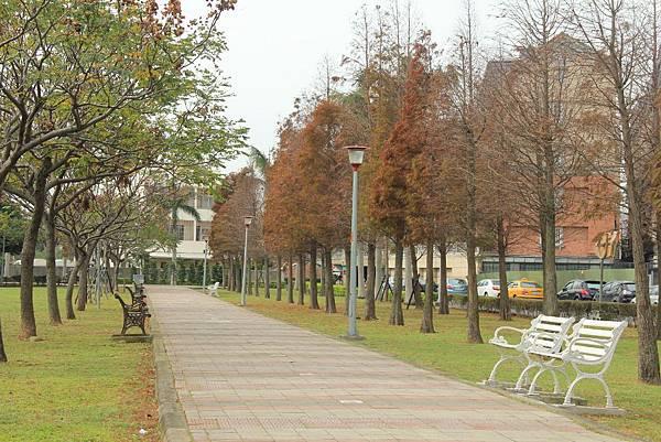 玉山公園落羽松 060 (1024x683).jpg