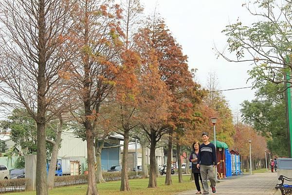 玉山公園落羽松 061 (1024x683).jpg