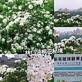 PhotoGrid_1556494405097.jpg