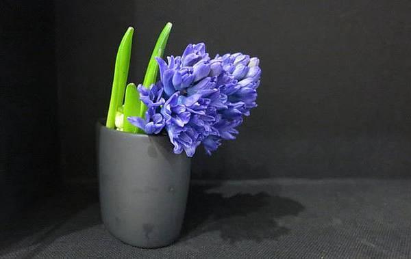 信手拈來的居家插花