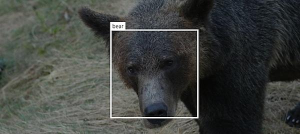 bear-id-ai.jpg