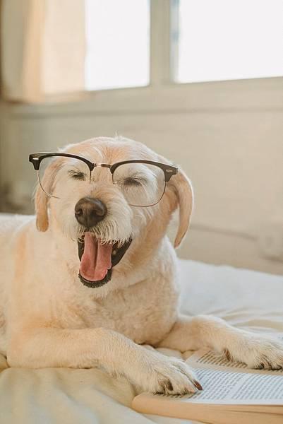 AI來分擔點導盲犬的工作了,等等,真有AI導盲犬嗎!?