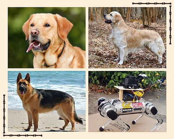 see-guide-dogs-and-ai-dog.jpg