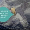 脫落的乳牙牙根呈蠶食狀