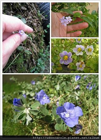 藍色小碎花