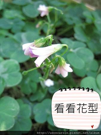 看看花型.jpg
