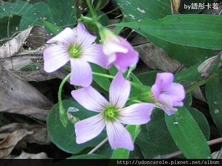 紫花特寫.jpg