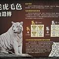 白老虎毛色遺傳