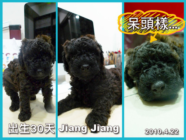 Jiang Jiang出生30天.jpg