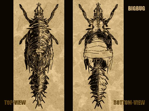 wwwbigbug-brown.jpg
