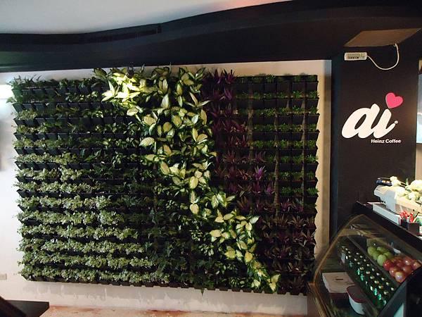 1011220基隆海因斯咖啡-植生綠牆-完工圖