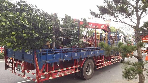 1030301樹林大安尊邸社區-高空植栽移植工程-施工後