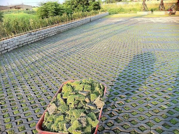 1030805桃園新屋3號咖啡館-植草磚綠化工程-施工中16.JPG