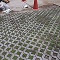 1030805桃園新屋3號咖啡館-植草磚綠化工程-施工中17.jpg