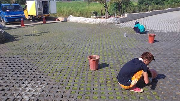 1030805桃園新屋3號咖啡館-植草磚綠化工程-施工中18.jpg
