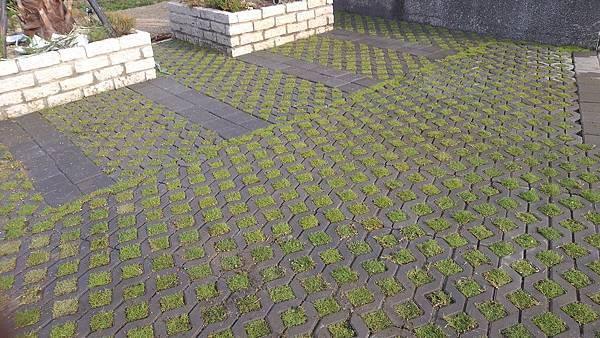 1030805桃園新屋3號咖啡館-植草磚綠化工程-施工中19.jpg