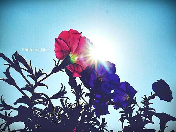 [2015.01.01] 2015的第一天。台北很難得的出現了暖陽