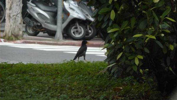 一邊開車還要一邊拍鳥!