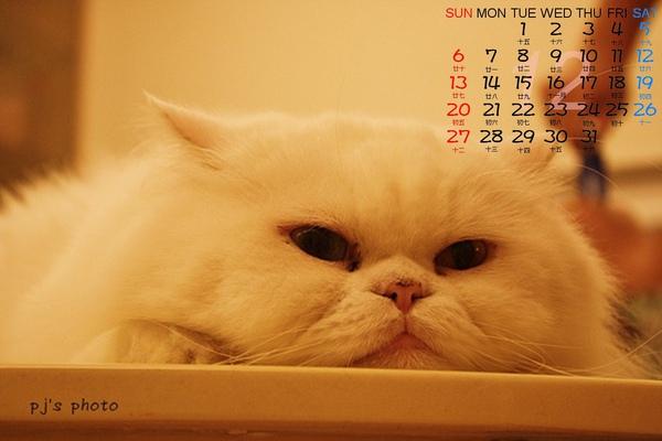 man12月桌曆.jpg
