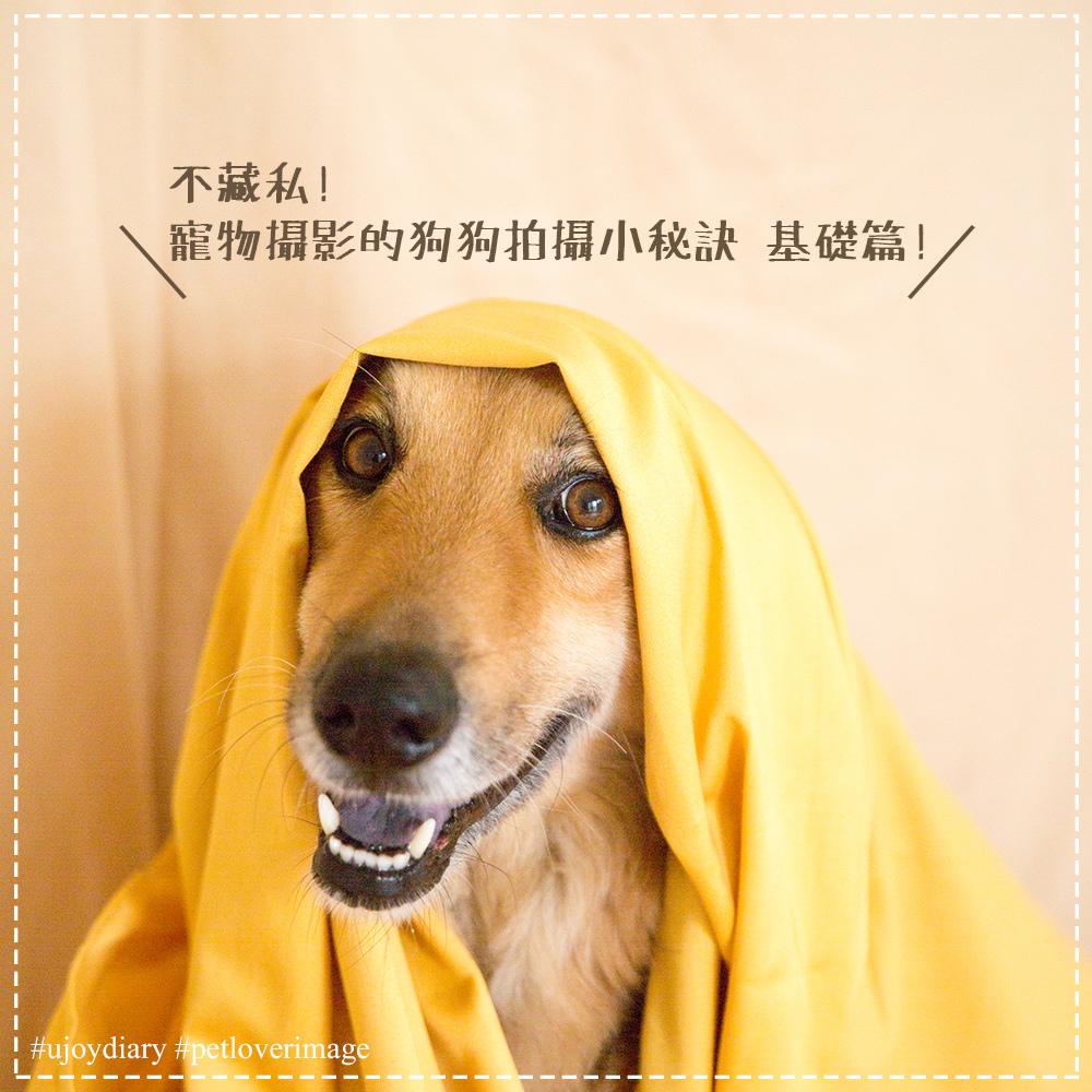 寵物寫真 (1).jpg