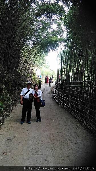 竹林~2.jpg