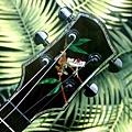 阿浪老師烏克麗麗-來自夏威夷.全世界最美麗的手工琴…_023.jpg