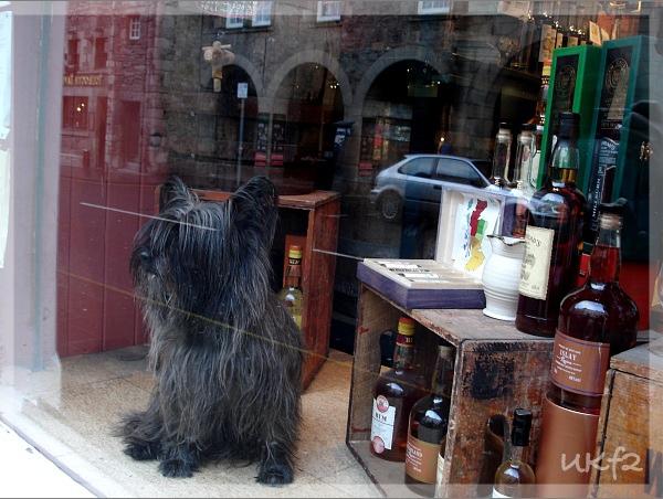 Whiskey Shop與狗