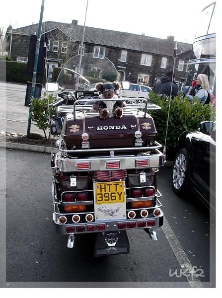 超酷的哈雷機車與小熊
