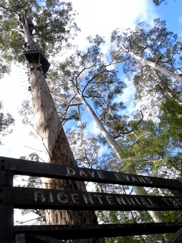 Bicentennial-Tree-03.JPG