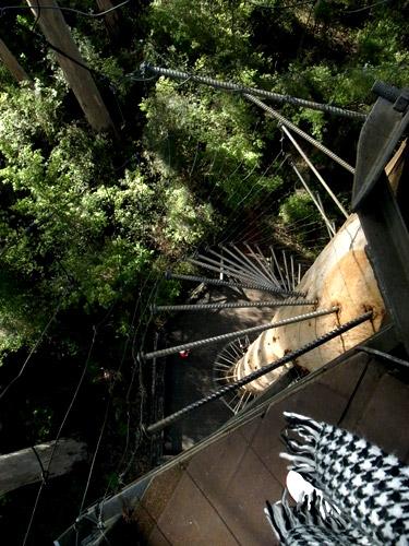 Bicentennial-Tree-05.JPG