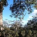 Bicentennial-Tree-06.JPG