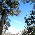 Bicentennial-Tree-07.JPG