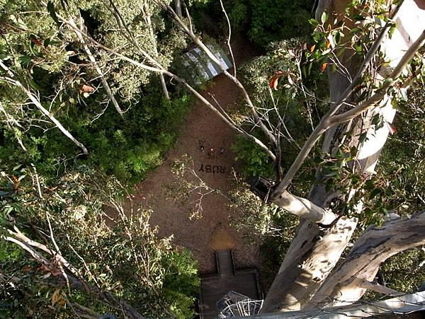 Bicentennial-Tree-08.JPG