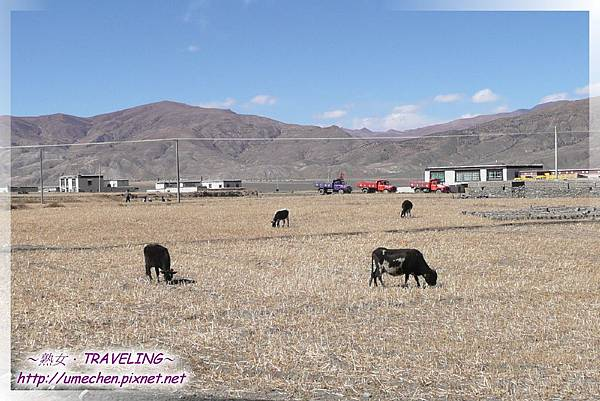 國道318與新藏公路交界路口_01