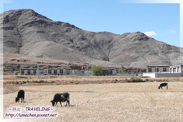 國道318與新藏公路交界路口_06