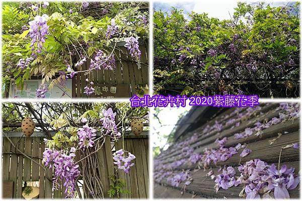 台北花卉村2020紫藤花季.jpg