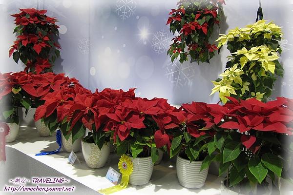 爭豔館-聖誕紅高品質盆栽展-1.jpg