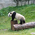 3j-臥龍熊貓-雜耍團.jpg
