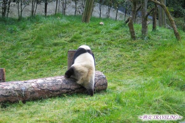 3l-臥龍熊貓-沒人看不玩了.jpg