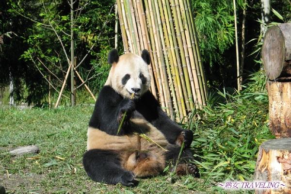 4n-臥龍熊貓-偶吃完再洗澡好了.jpg