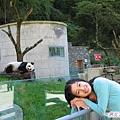 4x-臥龍熊貓-學你睡覺.jpg