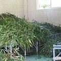 57-臥龍熊貓-箭竹正在洗澡哦.jpg