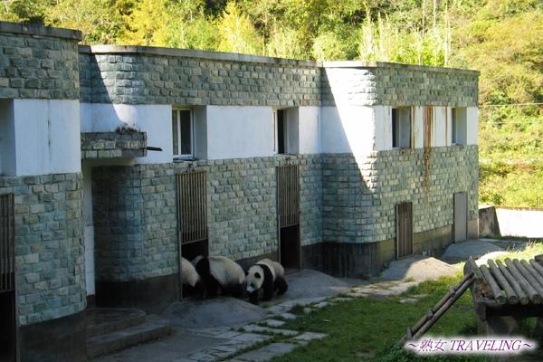 4h-臥龍熊貓-幼兒園-小朋友要進屋裏去了.jpg