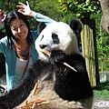 4s-臥龍熊貓-和大仔照相-和你比耳朵大.jpg